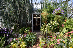 Center Stage (Eddie C3) Tags: marcopolostufanoconservatory wavehill botanicalgardens bronxnewyork glasshouses conservatory