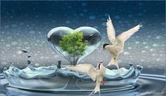 DÍA MUNDIAL DEL AGUA (Angelines3) Tags: agua aves arreglofotográfico árbol gotas diamundialdelagua