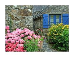 Bretagne (Yvan LEMEUR) Tags: bretagne maison maisonbretonne extérieur fleurs hortensias finistère voletsbleus armorique architecture vieillespierres fenêtre