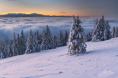 Dawn - Le Chasseron (Captures.ch) Tags: aufnahme capture clear fog klar nebel sonnenaufgang sunrise morgendämmerung morning morgen dawn winter waadt yverdon lechasseron switzerland swiss wald tree sky mountains landschaft landscape hügel himmel hill forest alpen arch baum berge schnee snow
