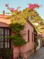 Colonia del Sacramento - Uruguay (Irene Carbonell) Tags: coloniadelsacramento colores colonia coloresdeotoño calles uruguaynatural traveling floralperfection flowers 50mm fotoscallejeras