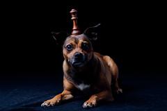 (13/52) (Zach & Artsy) Tags: artsy pug chess