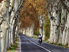 Sur ma route (Jolivillage) Tags: jolivillage route road strada arbres trees alberi platanes planetrees automne autumn hérault languedoc languedocroussillon occitanie france francia europe europa picturesque geotagged