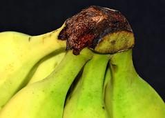 The banana bunch (rustyruth1959) Tags: yellow fruit bunch banana bananabunch closeup macro indoor home yorkshire england uk sigma105mmmacro nikond5600 nikon musa food berry herb banan finger