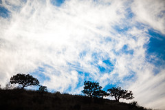 After All, We Were More Than Friends (Thomas Hawk) Tags: america lascruces newmexico organmountains organmountainsdesertpeaksnationalmonument usa unitedstates unitedstatesofamerica clouds silhouette fav10