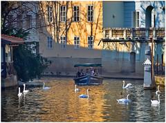 tourist´s delight (kurtwolf303) Tags: prag praha prague tschechien streetphotography people boat boot water wasser tourists touristen personen kurtwolf303 mft omd schwäne swans birds vögel kanal olympusem1 urban