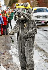 Bulldog Handing Out Candy (wyojones) Tags: montana whitefish feburary wintercarnival woodstockwhitefish dog bulldog costumes parade