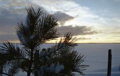 Lake Pyhäselkä (35mm) - Finland (Sami Niemeläinen (instagram: santtujns)) Tags: joensuu suomi finland 35mm film analog lomography filmphoto filmikuva pyhäselkä lake järvi kodak negative minolta rokkor talvi winter