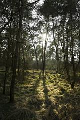 Wald (Markus Holsträter) Tags: nikon d3300 deutschland gras grass outdoor outside äste baum tree trees wald sonne schatten shadow