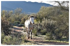 (valeriecozart) Tags: outdoors superstitionmountains horses oldwest western vistas arizona birds cactus rain fog mesa az us