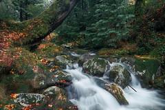 Stream (jorgeverdasca) Tags: goth winter creek river waterfall water stream forest woodland nature gerês portugal