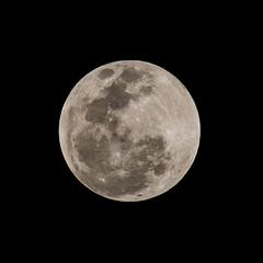 Moon (20:59) (ruifo) Tags: nikon d810 nikkor afs 200500mm f56e ed vr moon lua luna eclipse 20 21 january janeiro enero 2019 full llena cheia noite night noche astro astrophotography astrofotografia astrofotografía solar system sky ceu céu cielo earth penunbra umbra lunar mexico city cdmx ciudad méxico