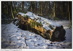 Winter Woodland (Paul Simpson Photography) Tags: woodland tree trunk snow winter wood woods forest twigmoorwoods leaves paulsimpsonphotography sonya77 imagesof photoof photosof imageof logs log nature naturephotography january2019 woodlandphotos woodlandwalk lincolnshire england
