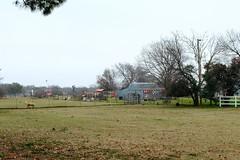 Little Horse Farm (Gene Ellison) Tags: farm animals horse miniature pasture fence barn windmill signs sky clouds overcast
