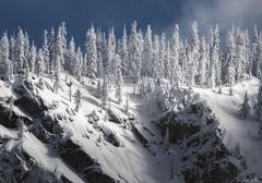 Snow Trees - Yosemite🌲 (zachgeek) Tags: d850 landscape winter nationalpark ca explore snow white trees blue nikon usinterior yosemite travel dreamy scenic dramatic sky california wonderland pine mountain nps yosemitenationalpark unitedstatesofamerica us