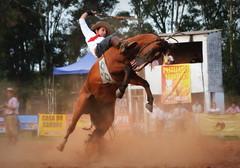 Giudici e Terrorista da Mancarrão (Eduardo Amorim) Tags: gaúcho gaúchos gaucho gauchos cavalos caballos horses chevaux cavalli pferde caballo horse cheval cavallo pferd pampa campanha fronteira quaraí riograndedosul brésil brasil sudamérica südamerika suramérica américadosul southamerica amériquedusud americameridionale américadelsur americadelsud cavalo 馬 حصان 马 лошадь ঘোড়া 말 סוס ม้า häst hest hevonen άλογο brazil eduardoamorim gineteada jineteada