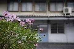 20190319a73_5894 (Gansan00) Tags: lce7m3 α7ⅲ sony japan 大分県 oita 日本 usukishi 臼杵市 landscape snaps ブラリ旅 03月 fe24105f4