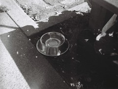 Dog bowl (Matthew Paul Argall) Tags: ansco50 fixedfocus 110 110film subminiaturefilm lomographyfilm blackandwhite blackandwhitefilm grainyfilm dogbowl plasticlens toycamera