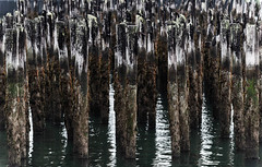 Fragile and Momentary Arrangement (Matt GNH) Tags: abandoned abstract architecture calm coast dock forgotten ocean old peaceful pier pilings relic sea seascape shapes shore water wharf wood wooden worn