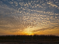 December Sunset (jhhwild) Tags: december sunset happy new year orchard clouds sky