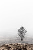 Just a Tree, modified... (amcgdesigns) Tags: andrewmcgavin eos7dmk2 tree mist misty atmospheric cold scotland scottishlandscape scottishweather canon100400mm moor