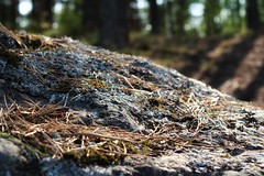 Island in Vyborg Bay (Live blog by Denis Snetkov) Tags: выборгскийзалив остров балтийскоеморе закат лес камни природа любительприроды трава мох иглы север суроваяприрода vyborgbay island balticsea sunset forest stones nature naturelover grass moss needles north harshnature