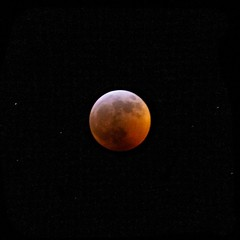 I almost froze my finger off to get this shot. (brandonw6622) Tags: moon red blood bloodmoon bloodmoon2019 cold winter frozen eclipse wold january 2019 redbloodmoon night sky astronomy astrophotography sony sonya6000
