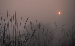 Sun rising_Patis Paton (Patis Paton) Tags: agra india landscape holidays plantation sun travel