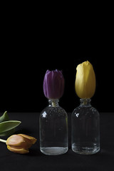 Tulips (Kitty Terwolbeck) Tags: flowers bloemen tulips tulpen art kunst artwork black coulorful colorful darkbackground blackbackground spring lente purple paars yellow geel orange oranje vase vaas glass glas