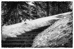 Les Errements de l'âme / The wanderings of the soul #15 (Napafloma-Photographe) Tags: 2018 bandw bw france géographie hautsdefrance letouquet métiersetpersonnages pasdecalais personnes techniquephoto blackandwhite monochrome napaflomaphotographe noiretblanc noiretblancfrance photographe province fr