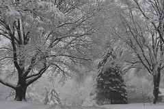 A walk in the snow (KsCattails) Tags: kansas kathrynkennedy kscattails neighborhood snow snowstorm