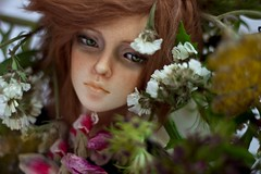 Resting on the flowers ([Hisomu]) Tags: bjd abjd doll ball jointed kanadoll adrian