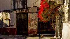 8874TS Colourful Chalki and a cat (2) (foxxyg2) Tags: art topaz topazsoftware topazsimplify topazstudio chalki naxos cyclades greece greekislands islandhopping islandlife red cats