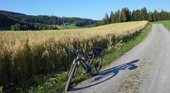 DSC05668 (ursrüegsegger) Tags: linden juli august getreideernte bauernhöfe landschaft regenbogen