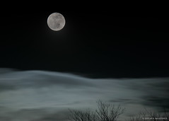 Super Wolf Lunar Moon 2019 (ballesteros_j) Tags: lunar eclipse blood moon full night photography clouds trees brooklyn fort greene park