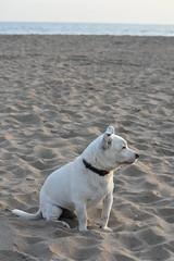 Ochi con mucho cuidado (esta_ahi) Tags: castelldefels ochi platja playa baixllobregat barcelona spain españa испания