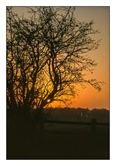 Sun Trap (david.hayes77) Tags: lichfield staffordshire staffs 1996 film fujivelvia contrejour silhouette tree fence landscape winter sunrise dawn sun suntrap happyfencefriday backlight hff