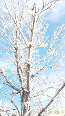 February 26, 2019 - A frost covered tree in Broomfield. (Anika H)