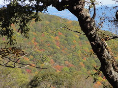 DSC07648 (TerrMys) Tags: northcarolina nc southern appalachians fall autumn october