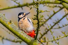SBF_1937 (Chiltern Snappers) Tags: birds bluetit dunnock greattit longtailedtit woodpecker woodpeckergreatspotted