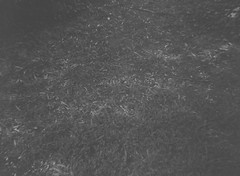 Dark ground (photo 2) (Matthew Paul Argall) Tags: belomoetude fixedfocus 120film 120 mediumformat blackandwhite blackandwhitefilm ilfordhp5plus hp5 ground
