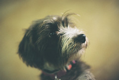 Trufa (Iago López Losada) Tags: nikkormat nikon nofilters naturaleza nikonistas 1972 dog doglover galicia gazes guapa
