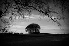 Copse (PeskyMesky) Tags: aberdeen aberdeenshire copse tree landscape scotland monochrome blackandwhite canon canon5d eos
