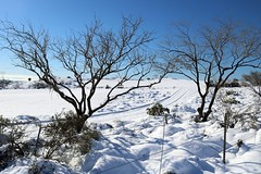 tonto-national-forest-1902230333 (nagerfran) Tags: cactus winter desert storm snow cold freeze arizona scottsdale tontonationalforest