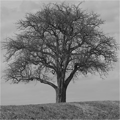 - unterwegs nach Haiterbach - (HOR-BS 696) Tags: berndsontheimer badenwürttemberg blackforest blackwhite schwarzwald schwarzweiss noiretblanc forêtnoire