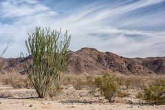 untitled (26 of 28).jpg (xen riggs) Tags: desert california joshuatreenationalpark february2018