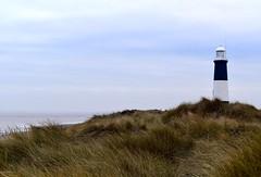 The Lighthouse (rustyruth1959) Tags: naturereserve navigationaid lantern light path grass water sea tower structure lighthouse spurnhead spurnpoint spurnpointlighthouse coast eastridingofyorkshire yorkshire england uk nikon1855mm nikond5600 nikon alamy beach landscape