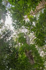 Route de Hana (Comète78) Tags: usa etatsunis hawai hawaï hawaii maui hana routedehana route road jardinbotanique botanique botanical botanicalgarden gardenofeden eden falls fall chutes chute oiseau bird fleurs fleur flowers flower bambou bambous plage ocean océan pacific pacifique beach redsandbeach blacksandbeach sand black red pipiwai trail pipiwaitrail randonnée threebearsfalls haleakala np nationalpark parc park waimoku