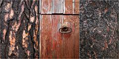 Scotsdale PicMonkey Image (Doris Burfind) Tags: tree bark pattern wood door knocker red paint weathered farm triptych barn scotsdalefarm ballinifad