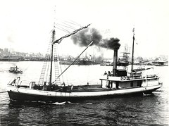 'Bellinger III' (1902 - 1912) - Sydney Harbour (Great Lakes Manning River Shipping NSW) Tags: johnwrightshipyards alecmackay micktreiberg missnelliejeffs misskennedy misscooper nambuccariverbar captainjohnrosten michaeltreiberg captainjameshunt captaintanglin nicholsonfamilycollection coastaltrader midnorthcoast australia tuncurry greatlakesnsw nswgreatlakes capehawkeharbour bellingerjwbst michaeltreibergcollection micknugent johnwrightsyt greatlakeshistory historicalgreatlakes bellinger wrightshipst painting allentaylorco nsw